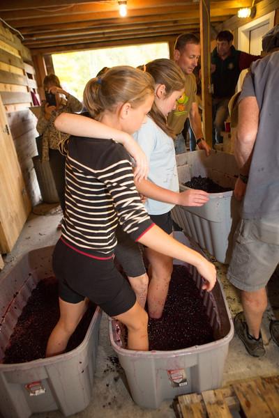 Red Horse Vineyard 2016 Harvest