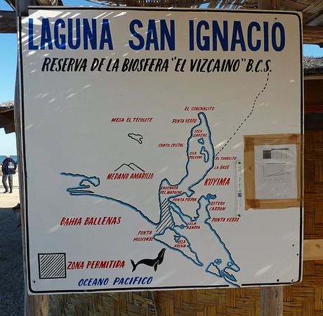 Baja, San Ignacio Lagoon