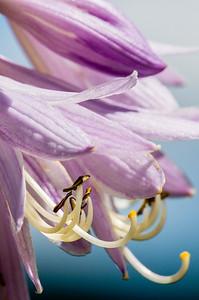 _DSC1571_flowers