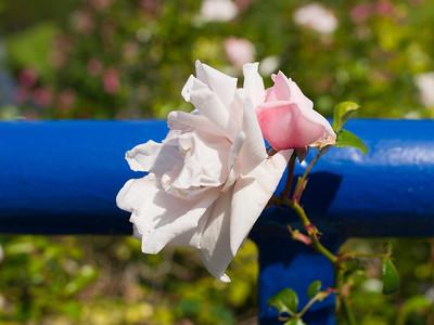 Voorjaar / Spring