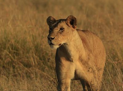 201603 Camp Entim Safari - Massai Mara - Kenya