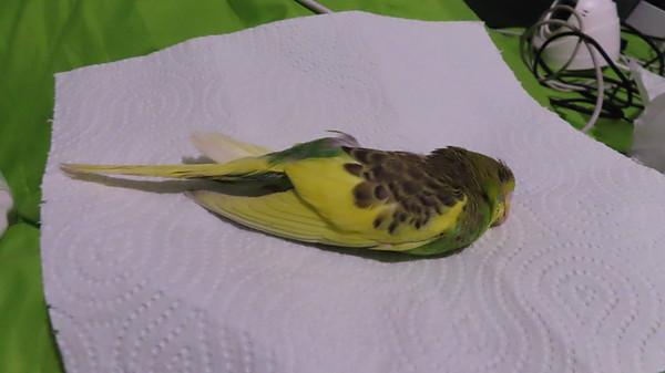 Bye bye little bird...