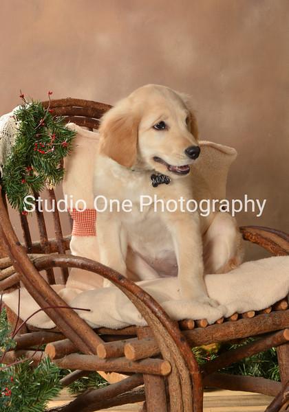 Mayne/Schlais Puppies