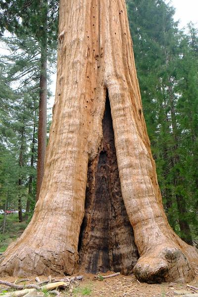 California Day 6 Sequoia 05-30-2017 61.JPG