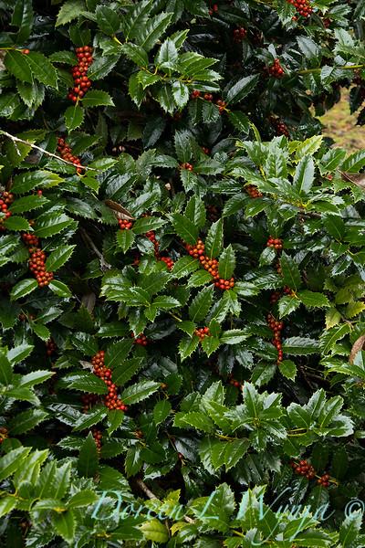 Peckerwood Garden_2122.jpg