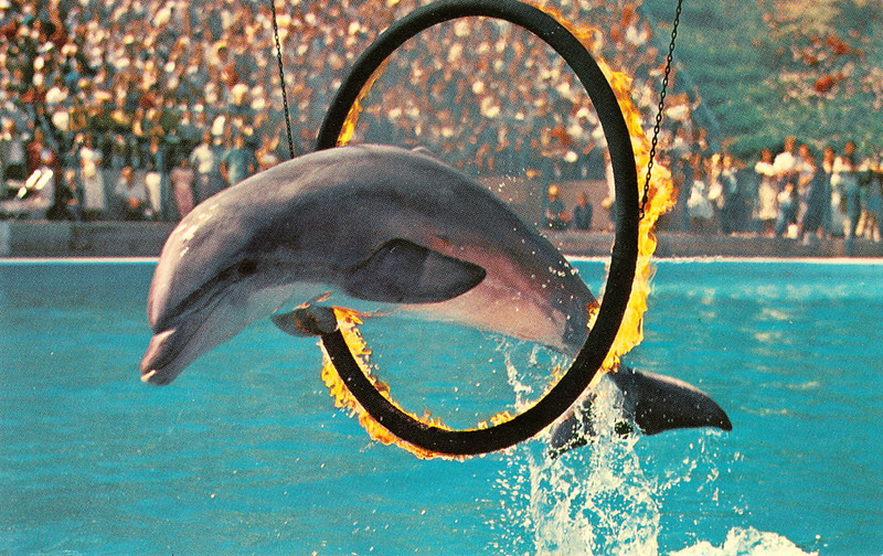 Porpoise Hoop Jump