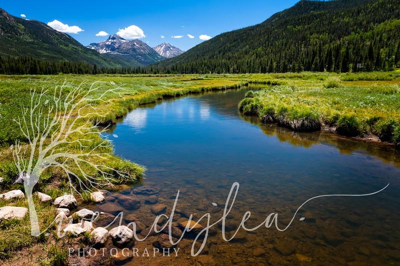 wlc Christmas meadows 07052020102020-Edit.jpg