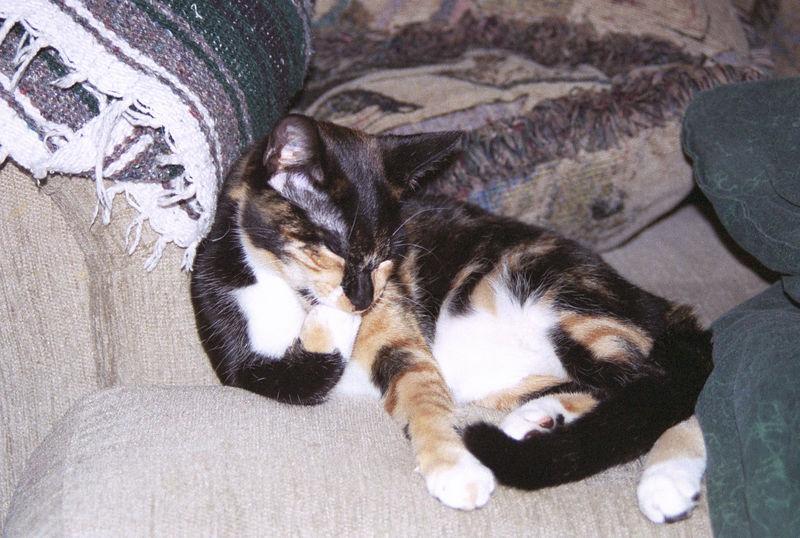 2003 12 - Cats 13.jpg