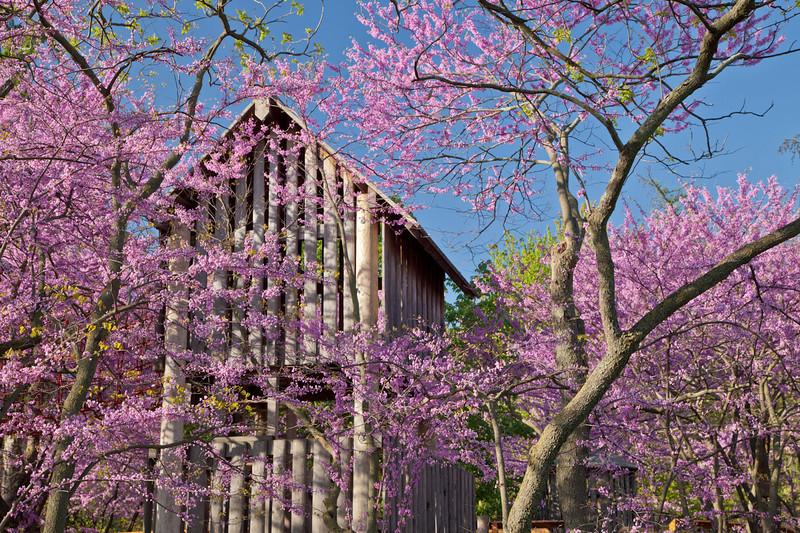 Spring13-0129.jpg
