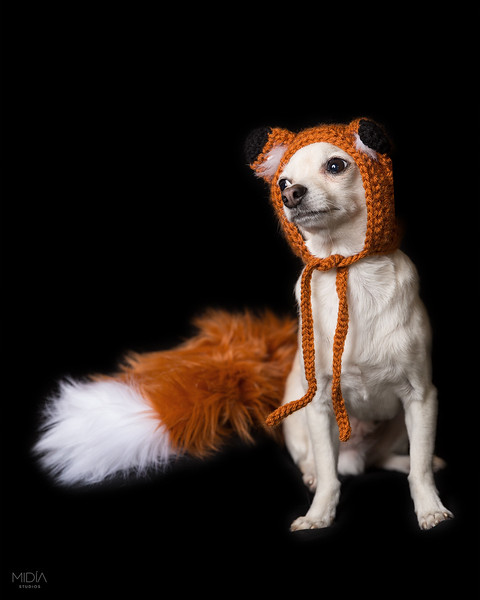 2017-08-29 Sir William the Dog