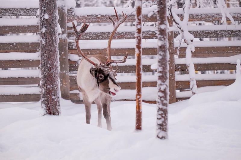 Finland_160117_90.jpg