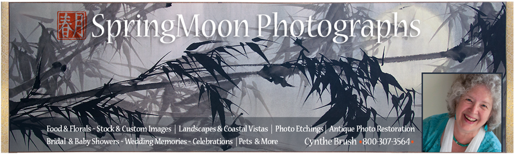 SpringMoon Photographs | Cynthe Brush, Photographer
