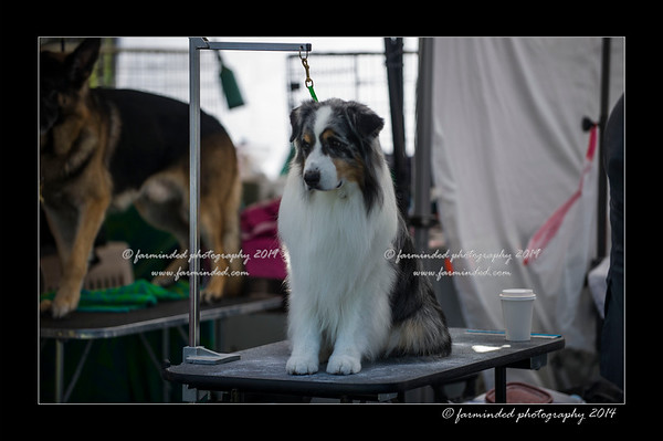 06/29/2014 - Alaska Kennel Club Dog Show