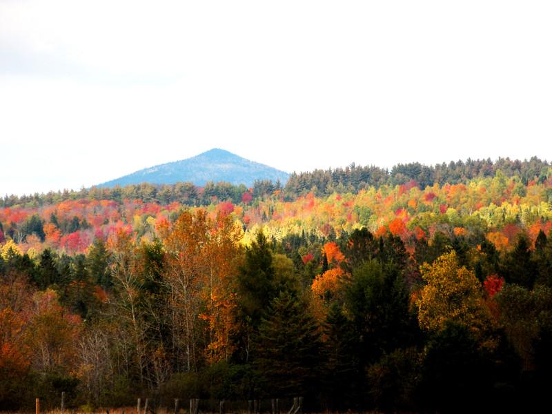 2014 10-4 Foliage
