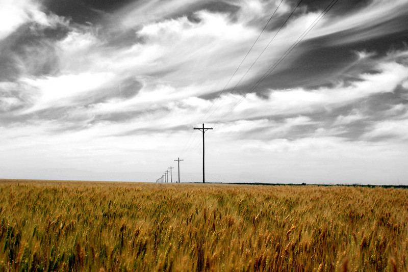 Wheat on black & white Sky.jpg