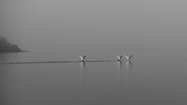 Birds Flying Over The Baltic Sea | Boiensdorf, Germany | Nature Photography