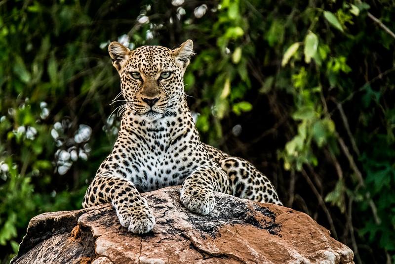 Samburu (13 of 70).jpg