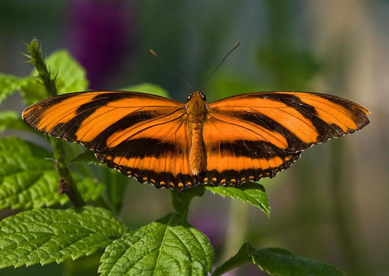 butterfly-3_3800786501_o.jpg