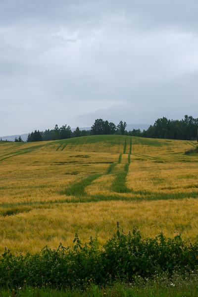 Etterrenning i korn
