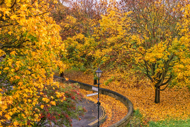 York autumn and lights-5.jpg