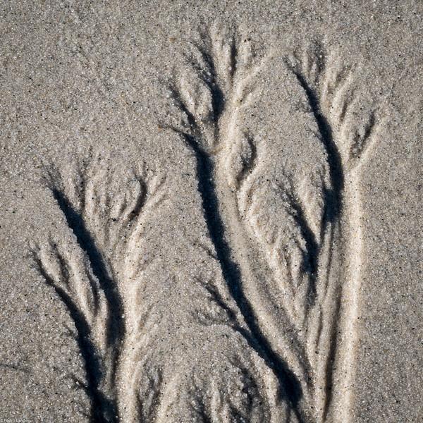 Low Sun on Sand