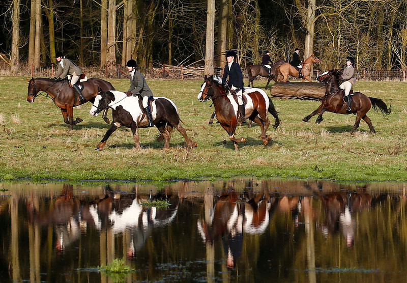 . Members of the Quorn hunt ride out for the traditional Boxing Day meet at Prestwold Hall near Loughborough, central England, December 26, 2012. A ban imposed seven years ago states that foxes can be killed by a bird of prey or shot but not hunted by dogs. Hunts continue nowadays with pursuers accompanying dogs in chasing down a pre-laid scented trail.  REUTERS/Darren Staples
