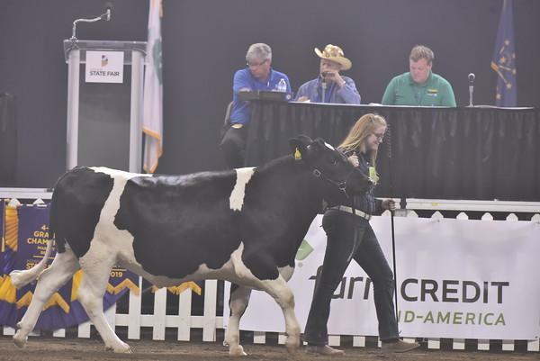 Ringshots - Dairy Steers
