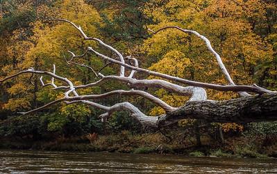 2015-10-09 Upper Yough, Peak Fall Colors