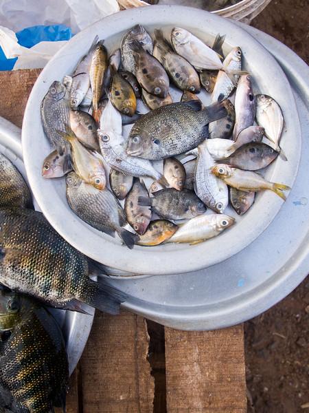 fish market small fish.jpg