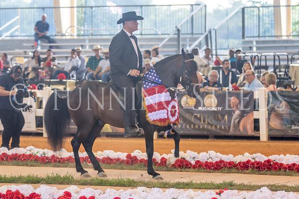 312-Fino Amatuer Stallions and Colts Championship