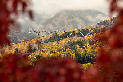 Fall Colors at Beaver Creek, CO