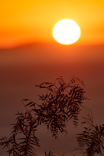 Bright setting sun with foliage in front