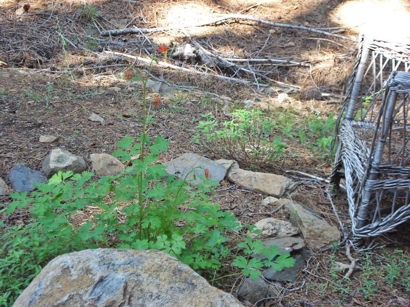 06-06-2015 First Watering Backyard Project (6).JPG
