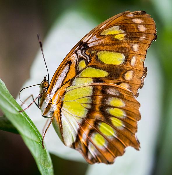 Butterfly 22.jpg