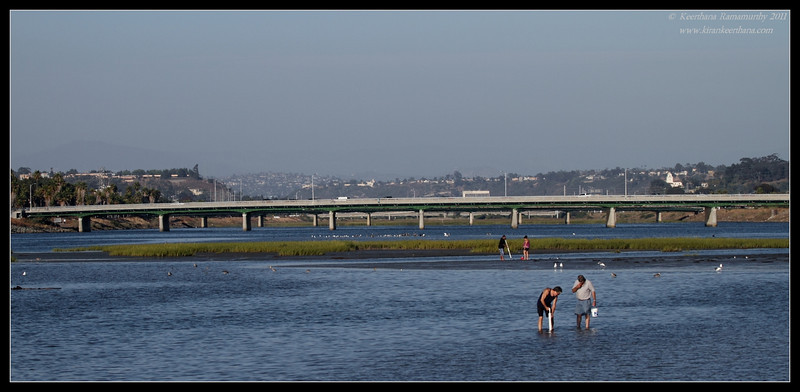 People looking for clams with the Sunset Cliffs Blvd bridge in the background, Robb Field, San Diego River, San Diego County, California, July 2011