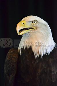 Eagle Days 2017