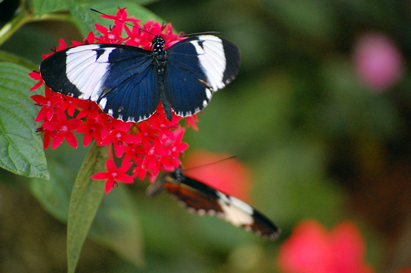 Butterfly Rain Forest