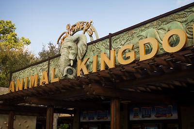 Disney - Animal Kingdom