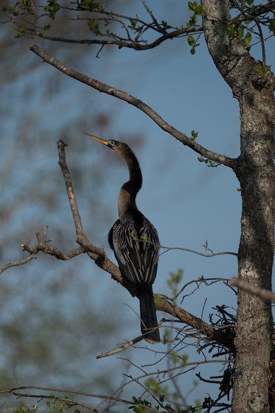YEAR OF THE  ROOKERY 063.jpg
