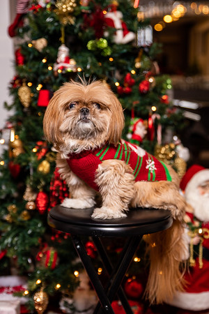 Saker Christmas Party 2019