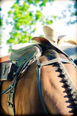 Upperville Horse Show, 2012