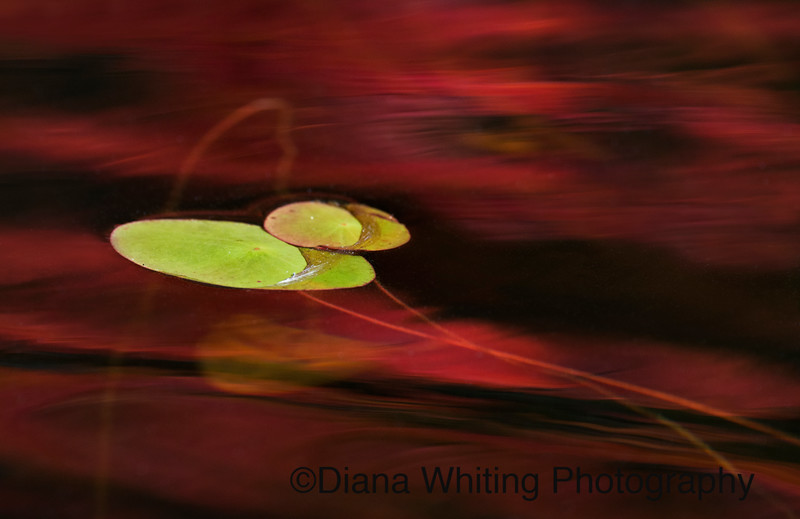 Water Art 5 .jpg