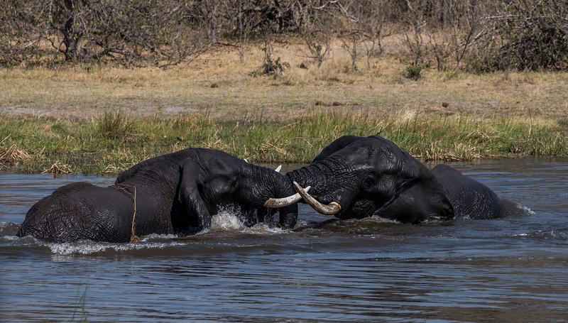 Botswana_June_2017 (2952 of 6179).jpg