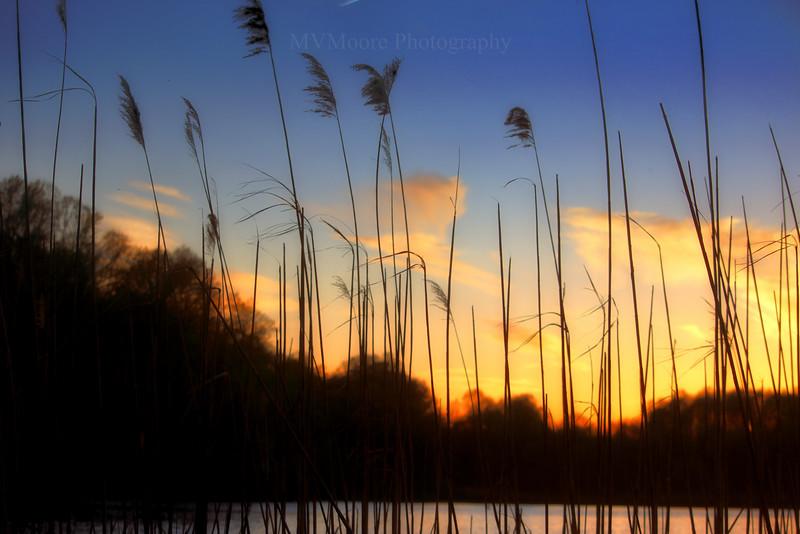 Lums Pond-4273-Edit.jpg