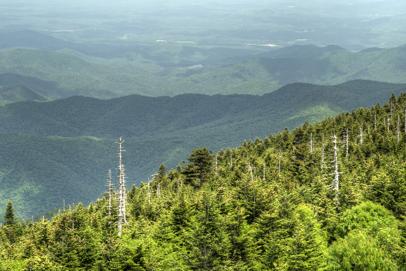 The remnants of a few dead trees on the mountain at Mt. Mitchell State Park at Milepost 255.4 on the Blue Ridge Parkway in North Carolina on Monday, June 15, 2015. Copyright 2015 Jason Barnette