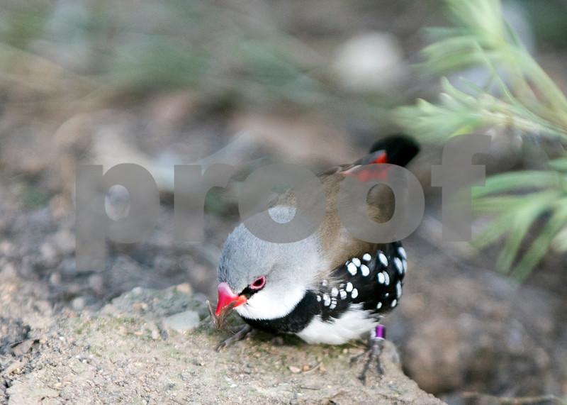 birds 25.jpg