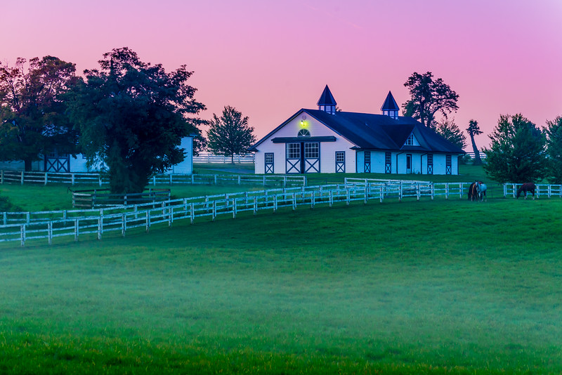 Morning - Kentucky Bluegrass Horse Farm - Lexington