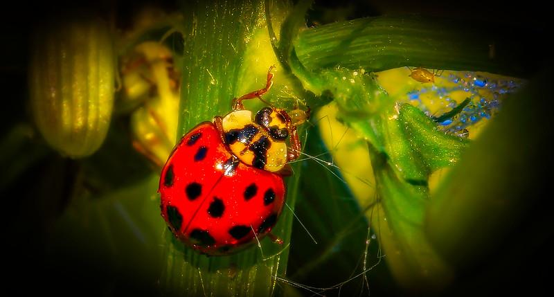 Bugs and Beetles - 80.jpg