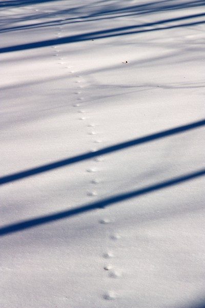 Animal tracks in snow. Near Salt Creek. Cook County, Illinois.