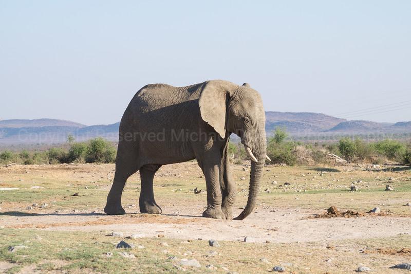 Madikwe-35.jpg
